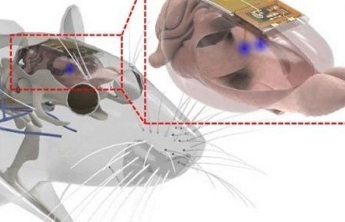 اختراع جهاز يزرع بالمخ للتحكم في مزاج الإنسان.. تفاصيل