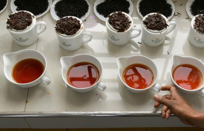 فوائد علاجية لا حصر لها… 7 أنواع شاي تساعد في التنفس بشكل أسهل