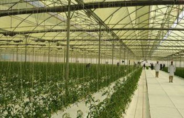 تعرف على أبرز المشروعات المنفذة بمجال استصلاح الأراضى والأمن الغذائى؟