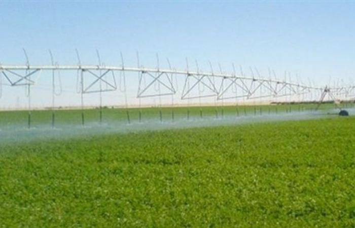 نقيب الزراعيين: مصر بالمرتبة الـ 47 عالميًا في توفير الأمن الغذائي