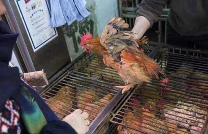 الصين تسجل أول إصابة بشرية في العالم بإنفلونزا الطيور