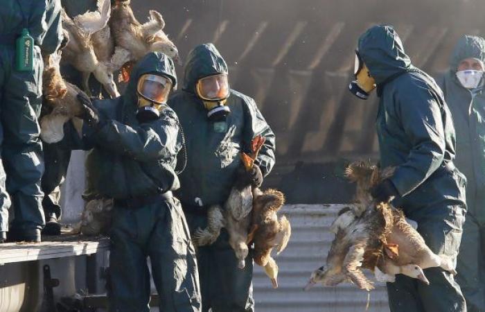 الصحة العالمية تعلق على القيود بسبب السلالة الجديدة من إنفلونزا الطيور