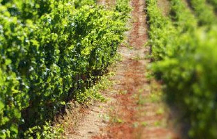 """""""بحوث الزراعة"""": مشروع """"دلتا مصر"""" له تأثير إيجابى على الناتج القومى ويوفر فرص عمل"""