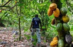 """القضاء الأمريكي يفصل في قضية """"العبودية"""" المتورط بها أكبر منتج أغذية في العالم"""