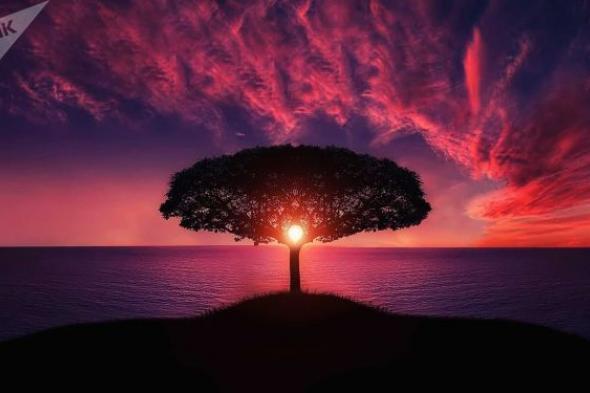 """محاولات لإنقاذ أطول وأقدم شجرة في العالم من حرائق تلتهم """"غابة العمالقة""""... صور وفيديو"""